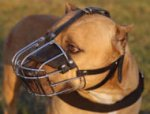 American Bandogge Mastiff Extra Large Wire Basket dog muzzle