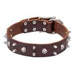 Cool Mastiff Leather Dog Collar with Nickel Plated Spikes and Skulls