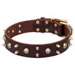 Mastiff Rock Style Brown Leather Dog Collar with Brass Spikes and Skulls