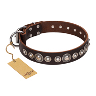 """Step and Sparkle"" FDT Artisan Glamorous Studded Brown Leather Collar for Mastiff"