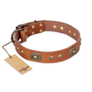 'Stunning Dress' FDT Artisan Tan Leather Mastiff Collar with Old Bronze Look Plates and Studs - 1 1/2 inch (40 mm) wide
