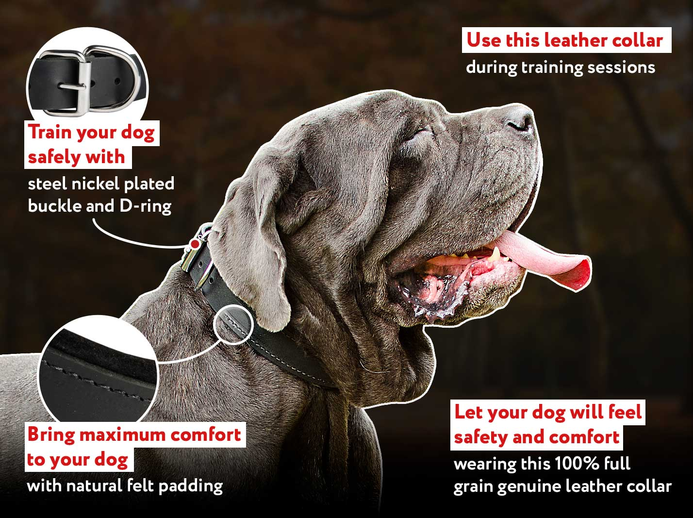 Padded Leather dog collar with thick felt for walking ,training