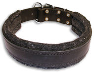 Mastiff Padded Black dog collar 20 inch/20'' collar - C24