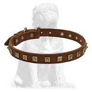 Fashionable studded leather collar for Mastiff