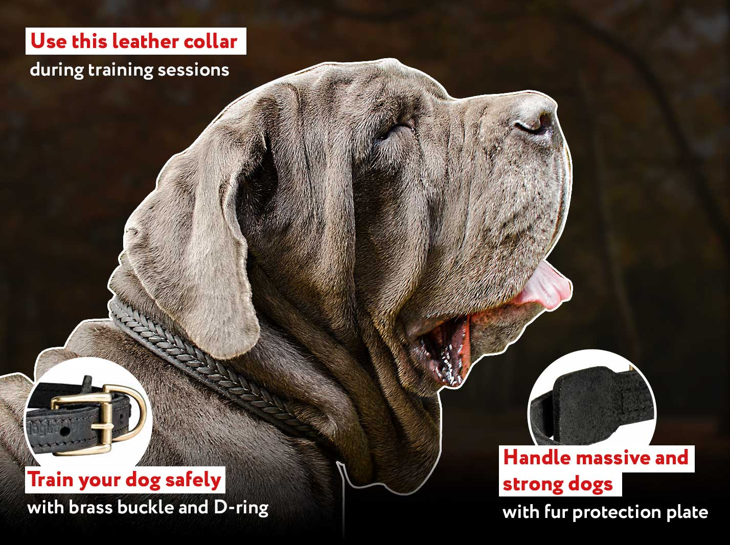 Inimitable braided leather Mastiff collar