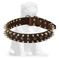 Mastiff Leather Collar With Spikes and Studs
