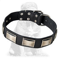 Fashionable Leather Mastiff Collar with Nickel Plates