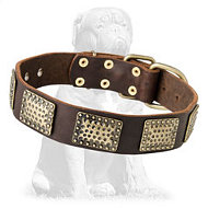 Gorgeous leather Mastiff collar with massive plates