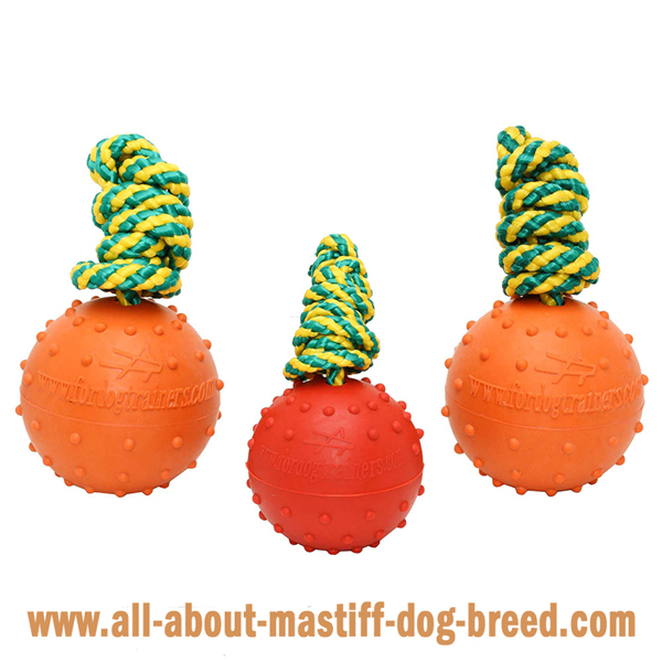Mastiff Dog Water Balls of 2 Sizes and in Different  Colors