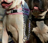 Dog leashe, dog lead,leather dog leash,nylon dog leash,walking dog leash