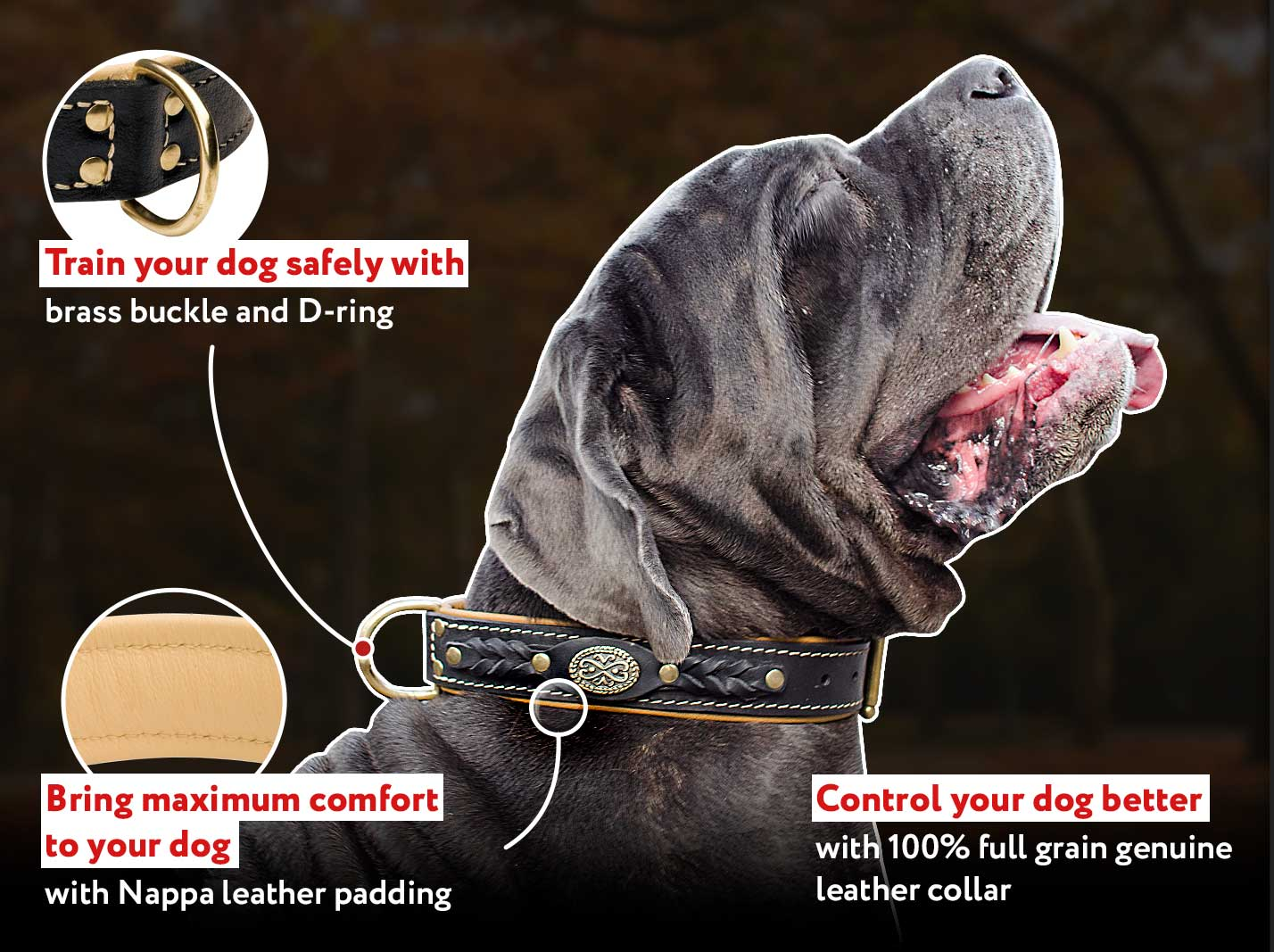 Mastiff Royal Nappa Padded Handmade Leather Dog Collar