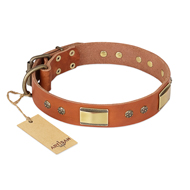 'Enchanting Spectacle' FDT Artisan Mastiff Tan Leather Dog Collar with Golden-Like Studs - 1 1/2 inch (40 mm) wide