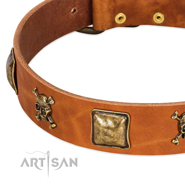 Stylish adornments on full grain leather collar for your four-legged friend