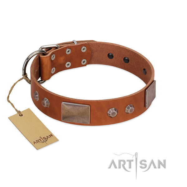 Adorned full grain leather dog collar with reliable buckle