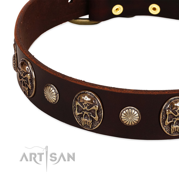 Full grain natural leather dog collar with adornments for everyday walking