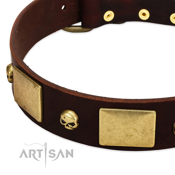 Top rate natural leather collar with rust resistant adornments for your canine