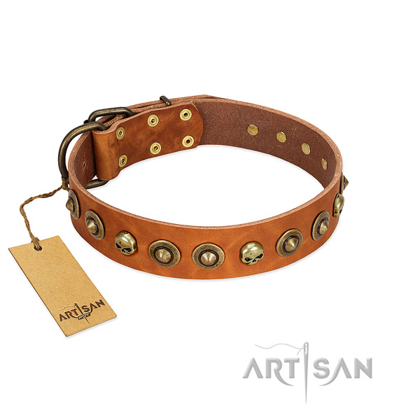 Genuine leather collar with amazing studs for your four-legged friend