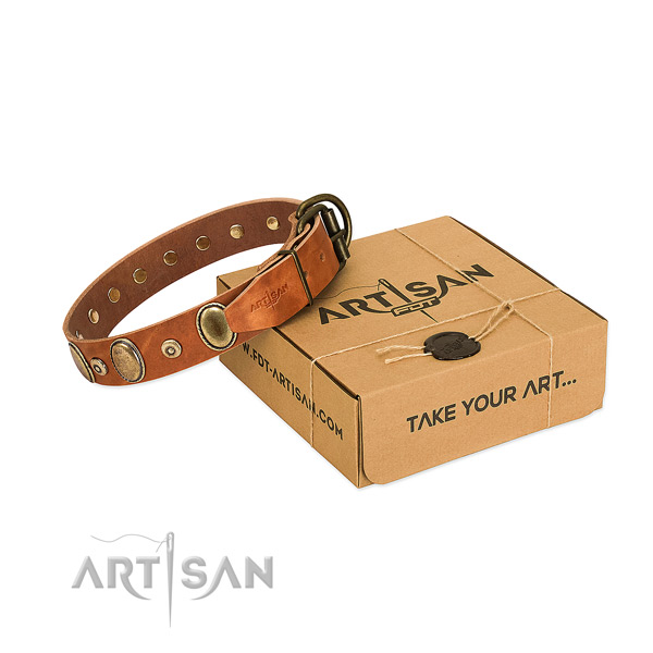 Durable adornments on everyday walking collar for your dog