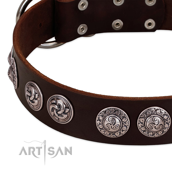 Remarkable leather collar for your four-legged friend everyday walking