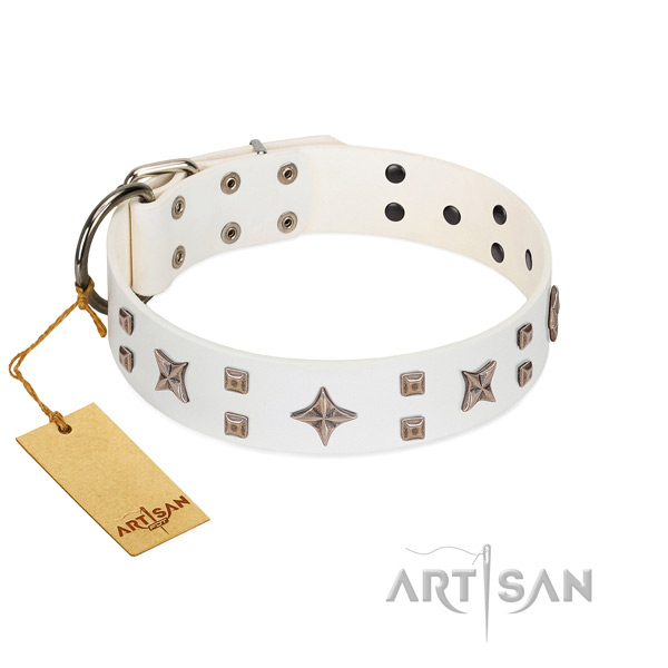 Comfy wearing full grain genuine leather dog collar with amazing studs