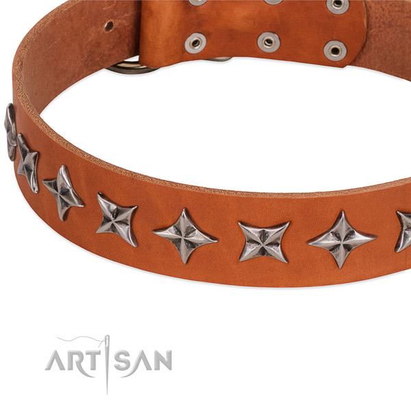 Basic training decorated dog collar of top notch full grain natural leather