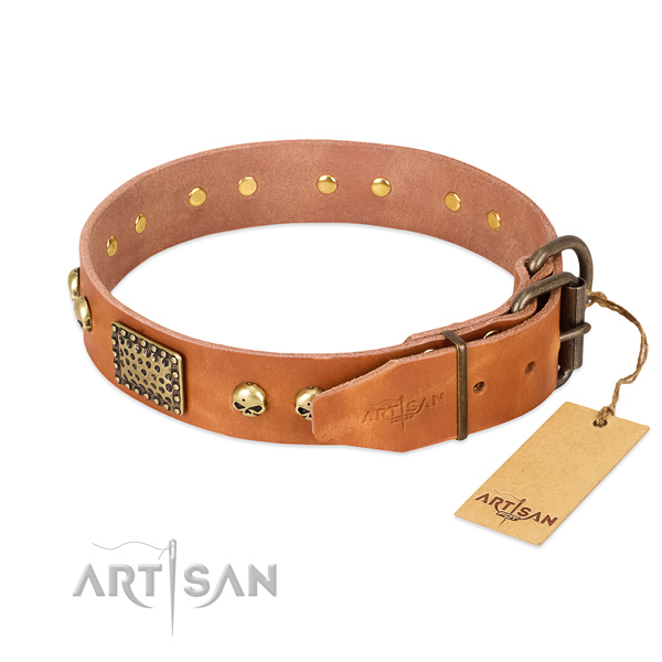 Rust-proof embellishments on everyday use dog collar