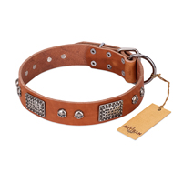 """Sparkling Skull"" FDT Artisan Tan Leather Mastiff Collar with Old Silver Look Plates and Skulls"