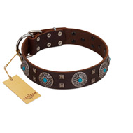 """Hypnotic Stones"" FDT Artisan Brown Leather Mastiff Collar with Chrome Plated Brooches and Square Studs"