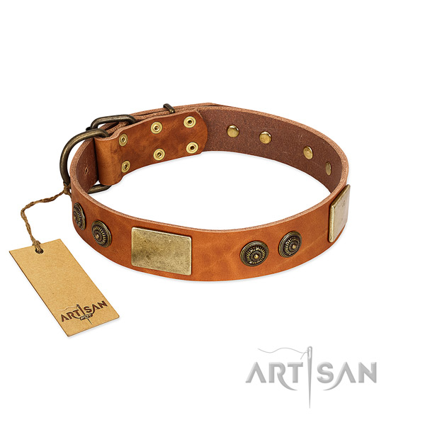 Fashionable full grain natural leather dog collar for basic training