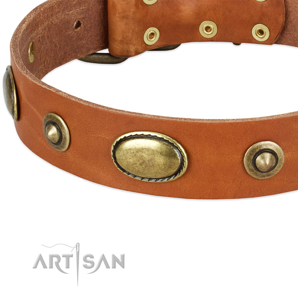 Corrosion resistant traditional buckle on genuine leather dog collar for your dog