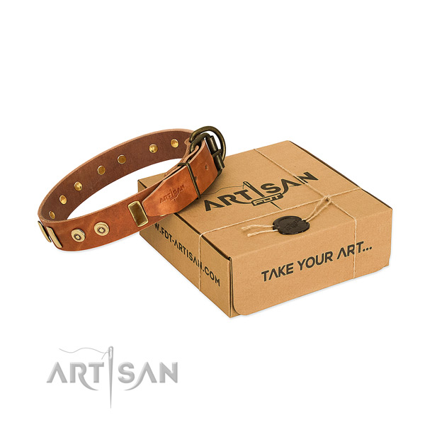 Genuine leather dog collar with significant studs for fancy walking
