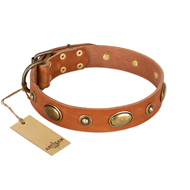 """Visual Magic"" FDT Artisan Tan Leather Mastiff Collar for Daily Activities"