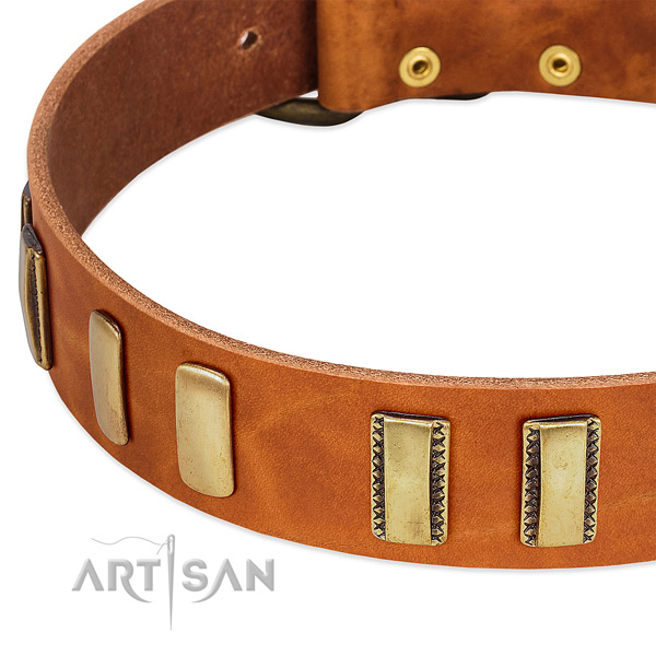 Best quality full grain genuine leather dog collar with adornments for stylish walking