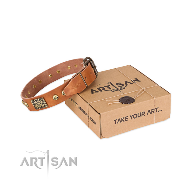 Rust-proof traditional buckle on dog collar for basic training
