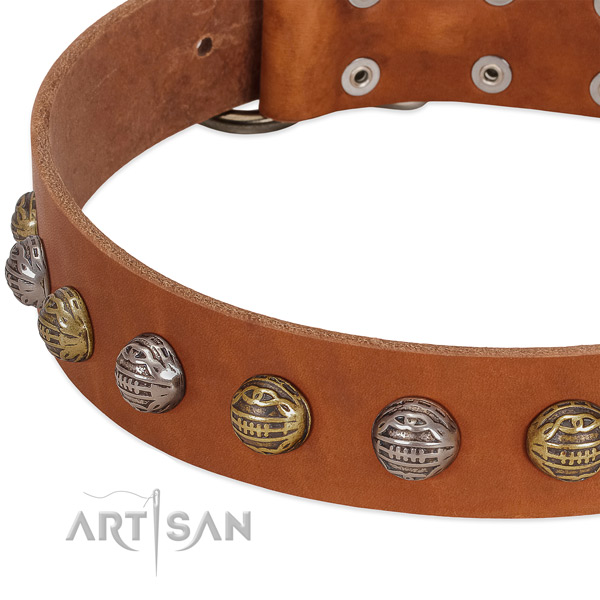 Reliable traditional buckle on full grain genuine leather collar for daily walking your canine