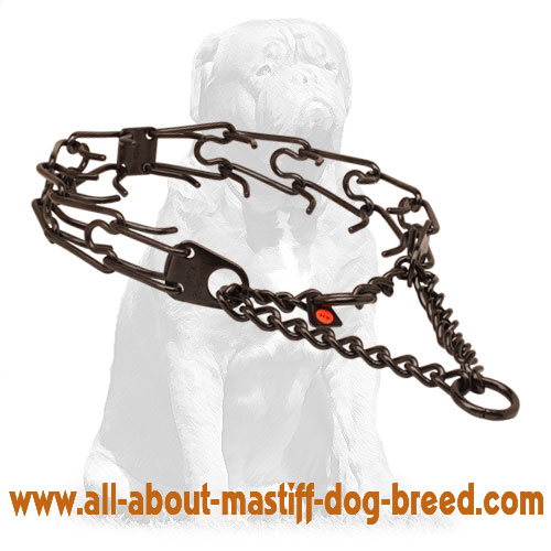Black stainless steel pinch collar for badly behaved dogs