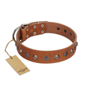 """Silver Age"" Fashionable FDT Artisan Tan Leather Mastiff Collar with Silver-Like Studs"