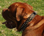 French Mastiff Leather Spiked and Studded Dog Collar - 3 Rows