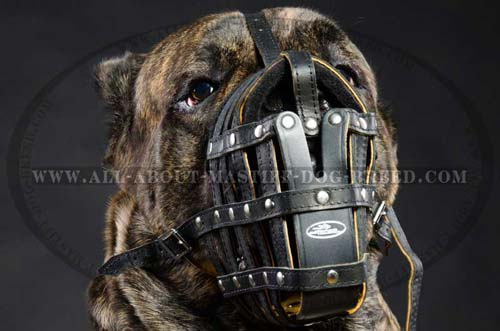 Dependable Mastiff muzzle for walking