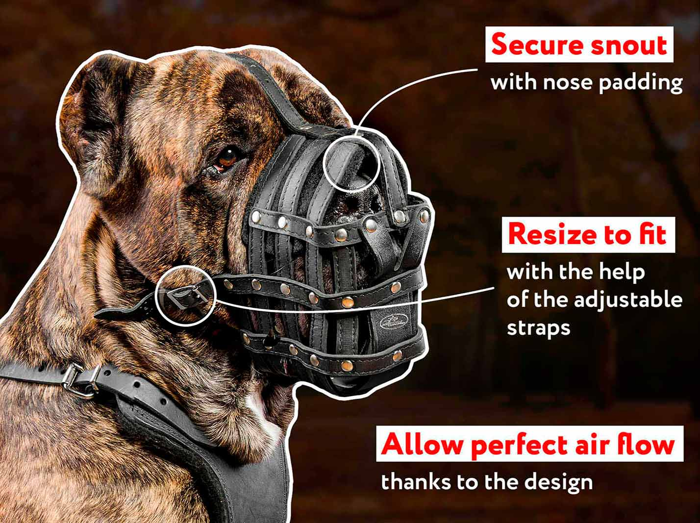 Perfect Ventilation leather muzzle for Cane Corso