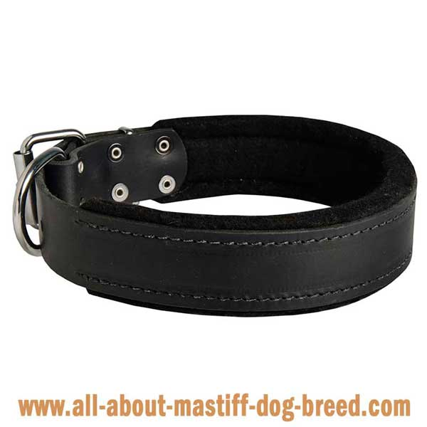 Comfortable Alpine Mastiff collar with stitching