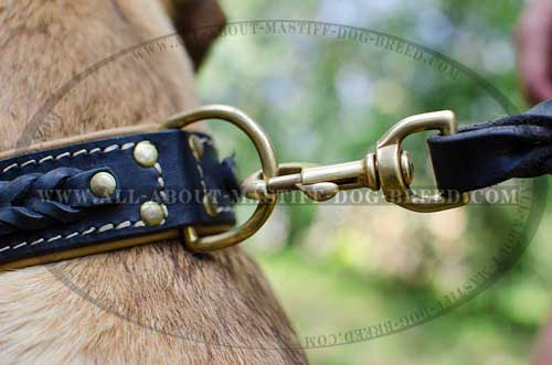 Cane Corso reliable leather collar with brass hardware