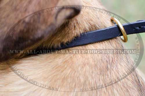 Tear proof Cane Corso leather collar