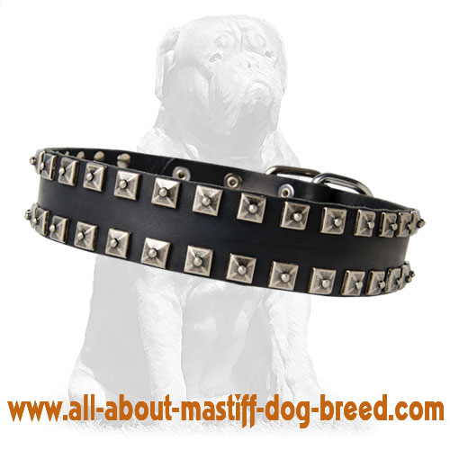 Attractive leather dog collar with nickel plates