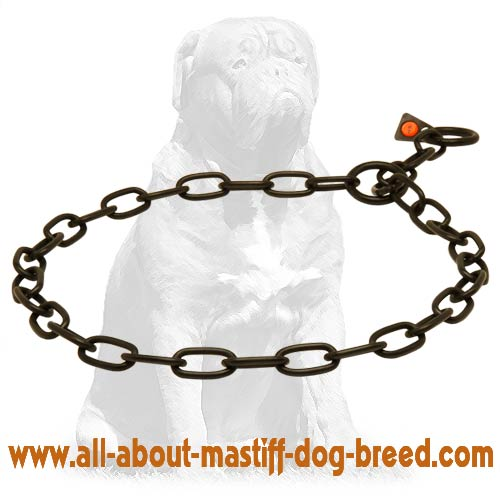 Easy in use choke chain dog collar