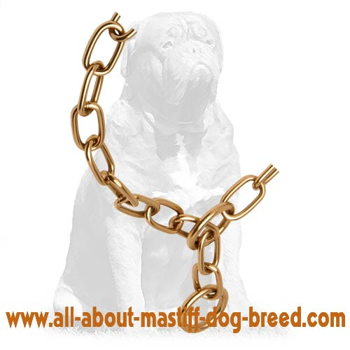 Choke chain curogan fur saver for Mastiff