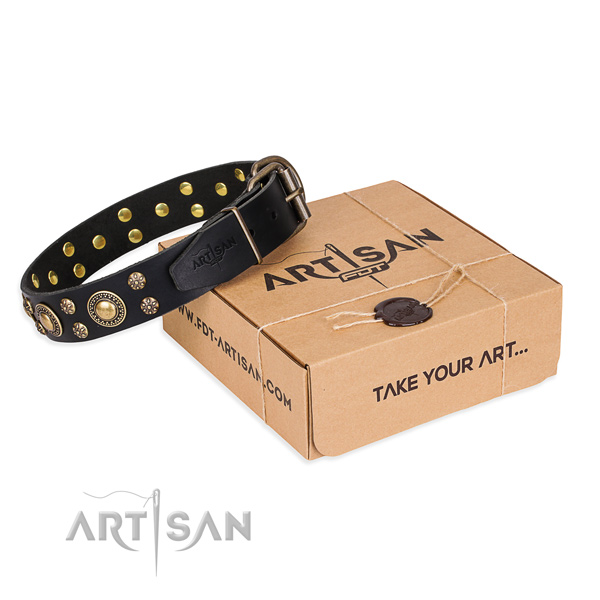 Daily leather dog collar with astonishing decorations