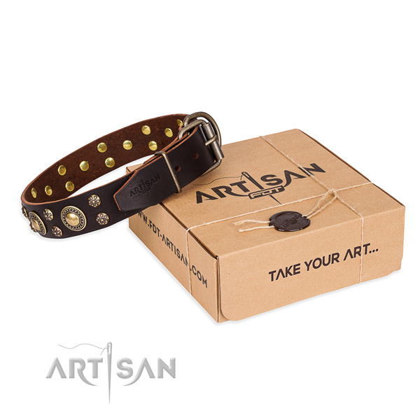 Daily leather dog collar with luxurious embellishments