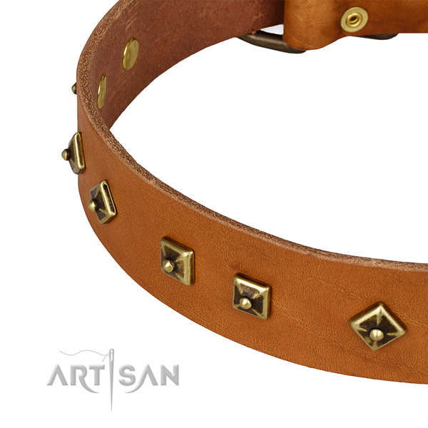 Daily use full grain natural leather collar with rust resistant buckle and D-ring