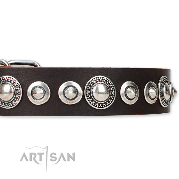 Snugly fitted leather Mastiff collar with resistant to tear and wear rust-proof buckle